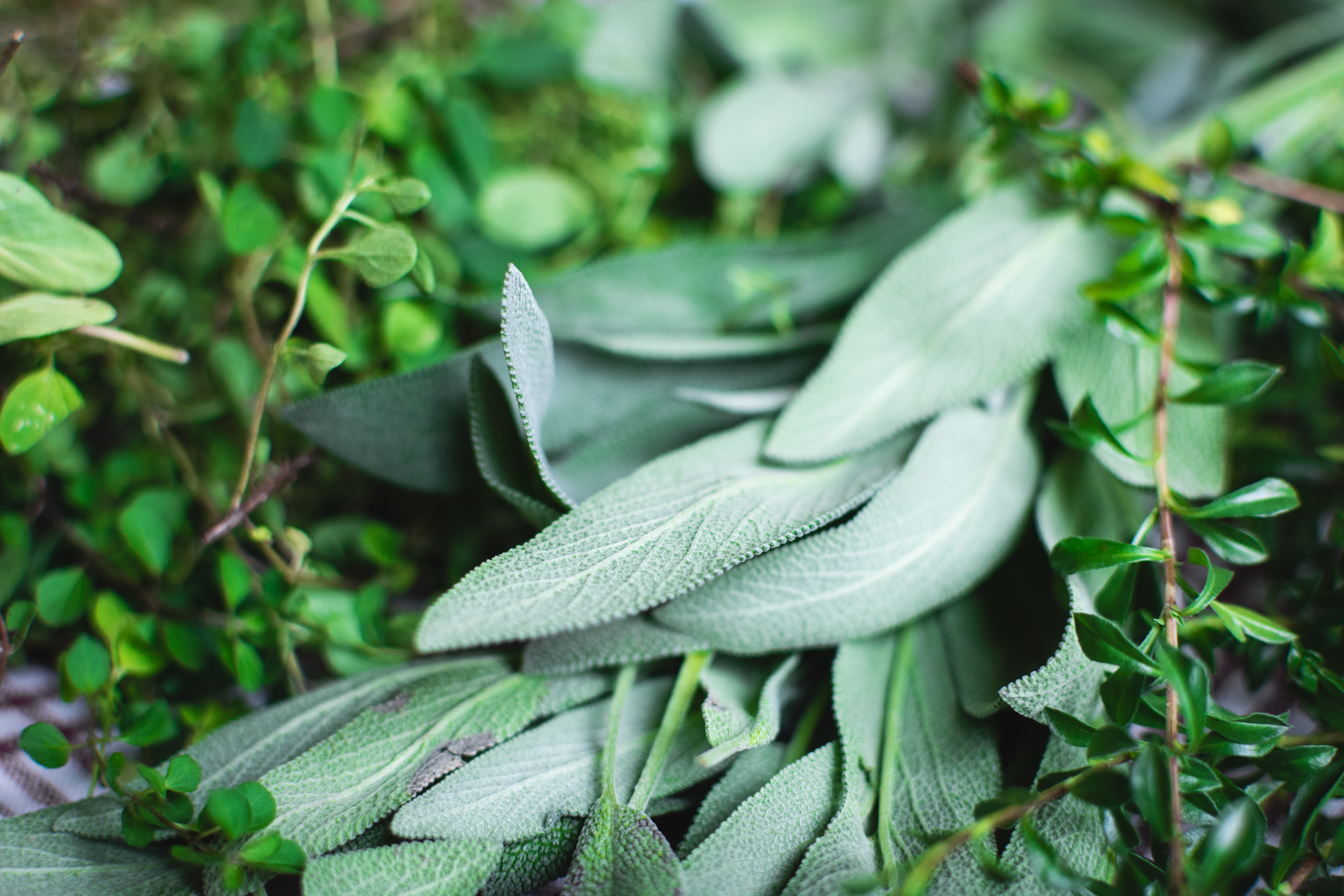 Herbs to have in your garden or cupboard